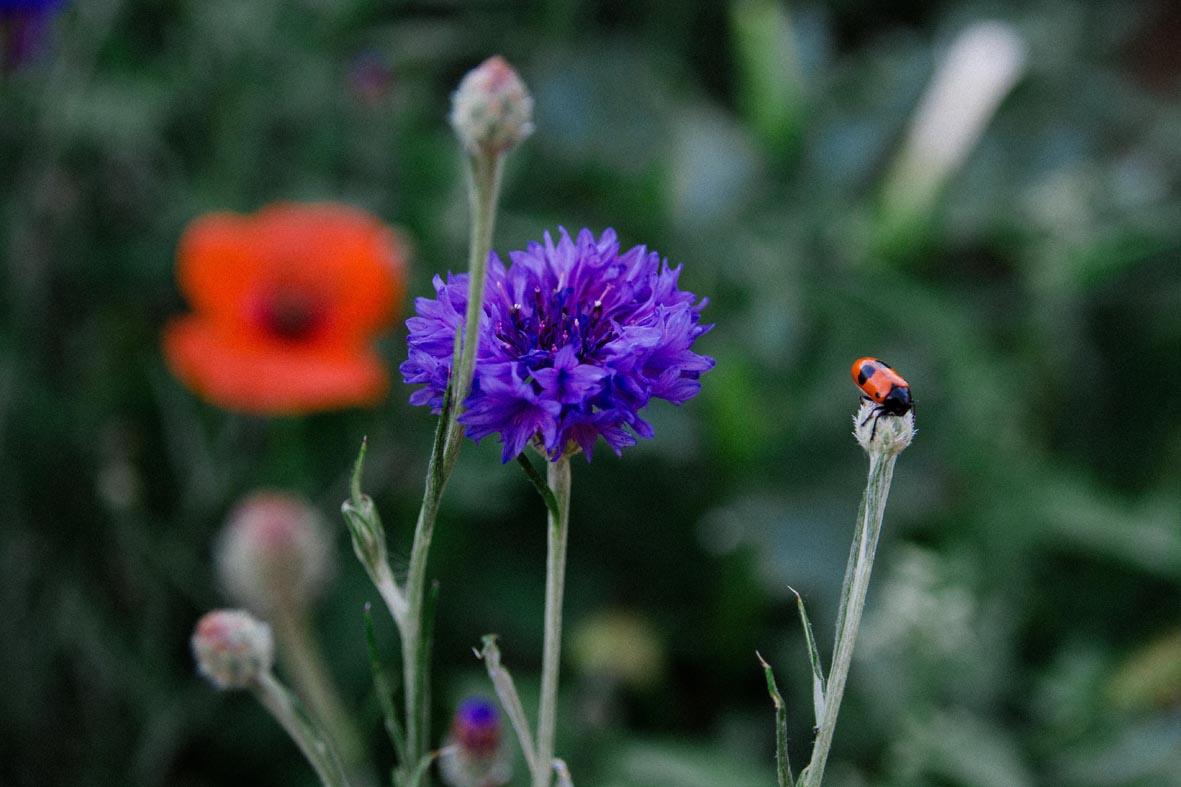 BL_Flowers